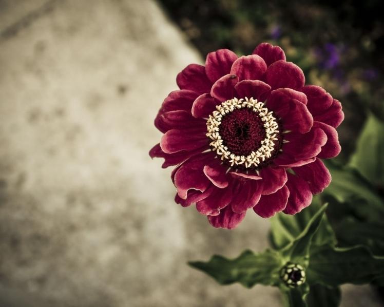 Red_Velvet_Flower